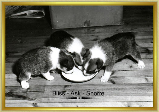 Bliss Ask Snorre